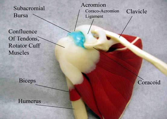 impingement-syndrome-of-shoulder